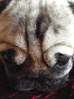 Pwees don't pug me... by puggers
