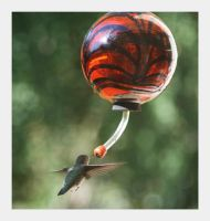 Humming Bird by MarinaC13