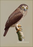 Papuan Hawk-owl by Leaubellon