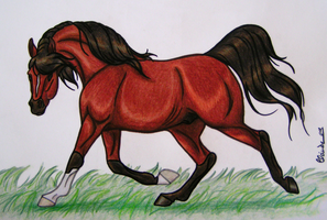 Arabian Horse - crayon by ShadinaLonesea