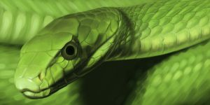 Green Mamba by lapis-lazuri