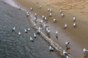Flock of seagulls by CouchyCreature