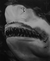 Killer Shark! Realistic charcoal drawing pencils by Echoesinthefog