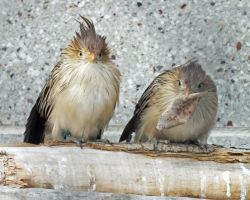 Poser and Player by Canislupuscorax