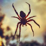 Spider 2 by eaking68