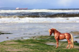 Fred jr. visits the beach by pegasuslolly