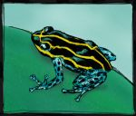 Another Poison Frog by NinjaSpidey