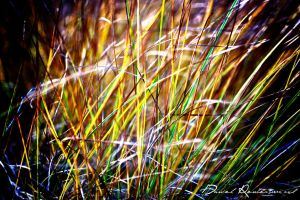 Grass.. by danniibooy