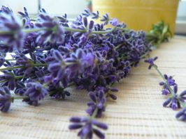 lavender by andi40