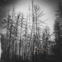 Silver Thorns II by Anguis-IX