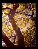 Golden Tree by Solartez