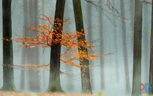 Forest landscape by sacso