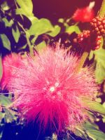Pink Fluffy~ by Hiromi415