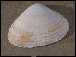 Shell by Dominick-AR