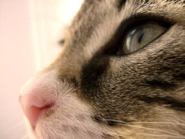 I'm Watching You.. by cerona