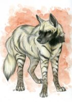 Striped Hyena Coloured Sketch by Korrok