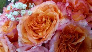 Weathered Roses by GUDRUN355