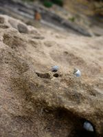 Beach Macro 2 by freespace