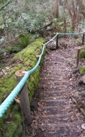 Stairs Through Woods 09 by Gracies-Stock