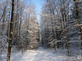 Winter Forest by IndianRain