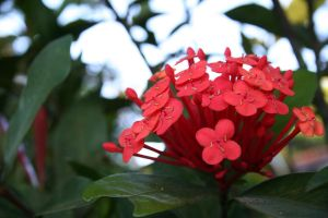 Red Natural Bouquet by Moyashi-Arts--Chico