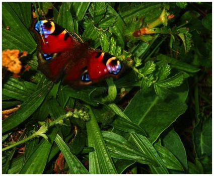Butterfly at Night 2 by Forestina-Fotos