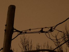 telephone wires by cowboyhat