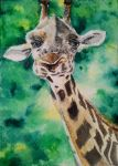 ACEO - Giraffe - watercolor by Giselle-M
