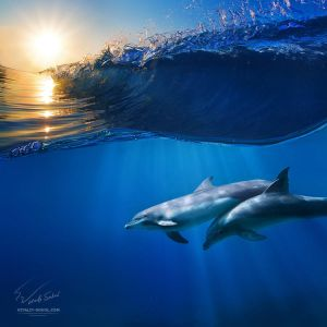 Two beautiful dolphins under wave by ~Vitaly-Sokol