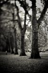Between tall trees by gluteusmaximus