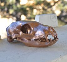 Hand Made Replica Aardwolf Skull by MorRokko