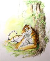 relax tiger by nbeilke
