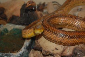 Snake 1 by adamlonsdale