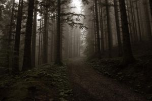 Italian Forest 3 by Adres89