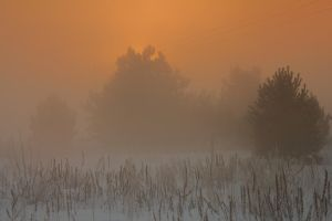 Misty morning VI by uosiek1