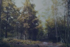 Forest 56 by Amalus