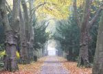 autumnal alley by Attila-G