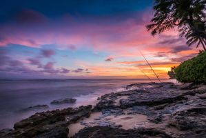 Tropical Colors by Sparkofhawaii