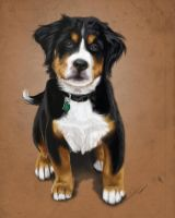 Baby cooper: puppy portrait by Yoell