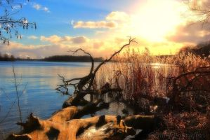 beautiful nature at Lake Tegel 2 by MT-Photografien
