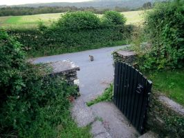 cat on a road by harrietbaxter
