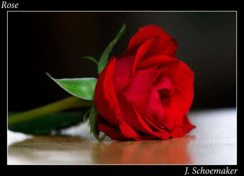 Rose by Jna1985