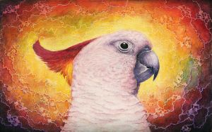 Rainbow Cockatoo by shanskala