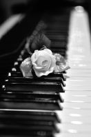 Flower on Piano by TWOphotography
