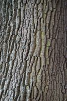Tree Texture (Stock Photo) by jeffkingston