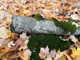 Maple Covered Moss by mrcbax