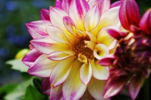 Star Flower by HrWPhotography