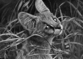 serval cat by Bengtern