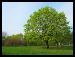 Tree in park by soulindarkness