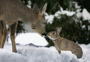 Bambi and Thumper: Good old Friends! by A-R-T-Q-U-E-E-N7227